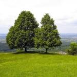 Aussichtspunkt auf dem Jusi (Foto: Kreh)